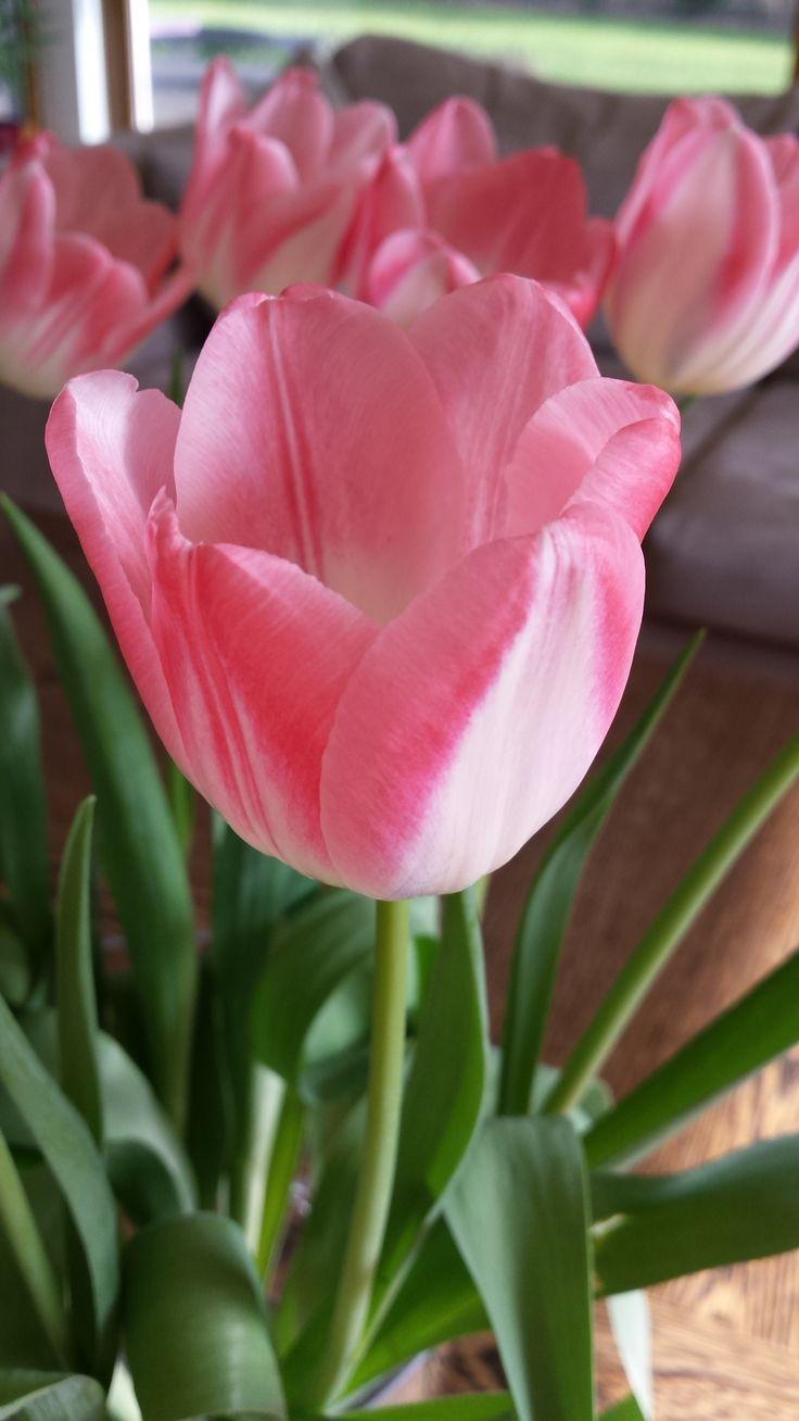 Wiosenne kwiaty.