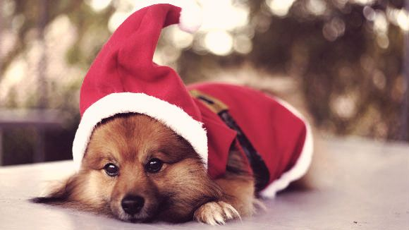 5 Dog Christmas Outfits for the Howl-iday Season | PetCareRx