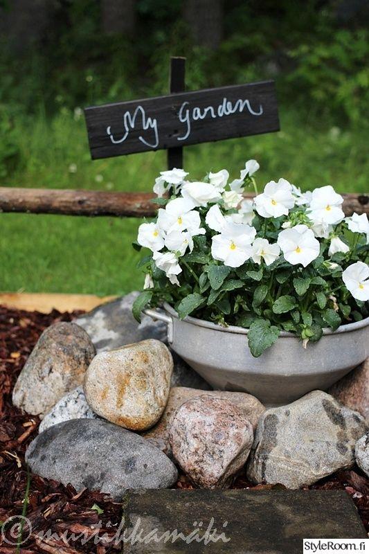 piha,puutarha,kesäkukkia,kesäkukat,orvokit