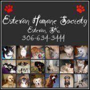 Estevan Human Society in Estevan Saskatchewan https://www.humanesociety.com/index.php/pets/shelters/57-saskatchewan-animal/557-estevan http://www.bestcatanddognutrition.com/roger-biduk/canadian-animal-rescues-shelters/ Roger Biduk