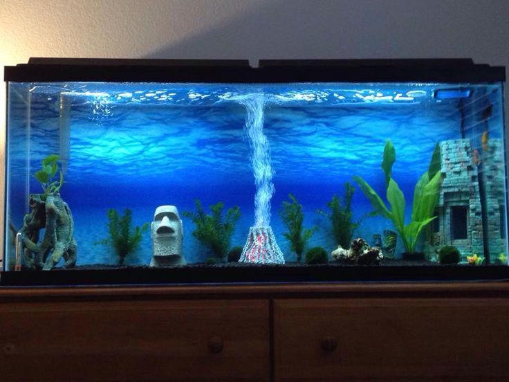 1000 ideas about 100 gallon aquarium on pinterest 300 for Freshwater fish tank ideas