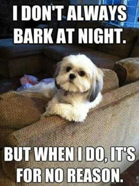 16 Funny Shih Tzu Memes Of All Time