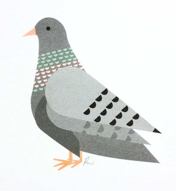 Pigeon print from Scout Editions