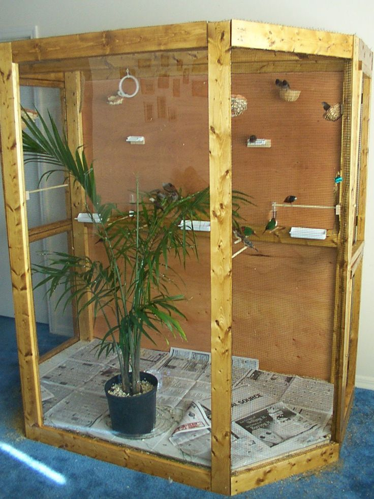 best 25 bird aviary ideas on pinterest diy budgie toys. Black Bedroom Furniture Sets. Home Design Ideas