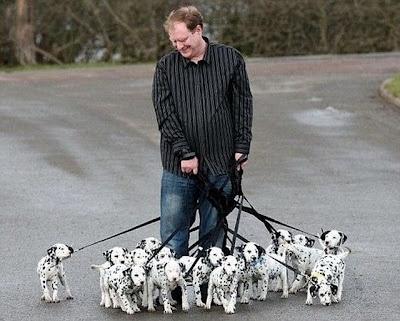 101..Spots, Dreams, Dalmatians Puppies, Pets, Dogs Art, Life Goals, 101 Dalmatians, Crazy Cat Lady, Animal