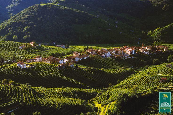 Filodora vineyards - Valdobbiadene (TV) - Veneto