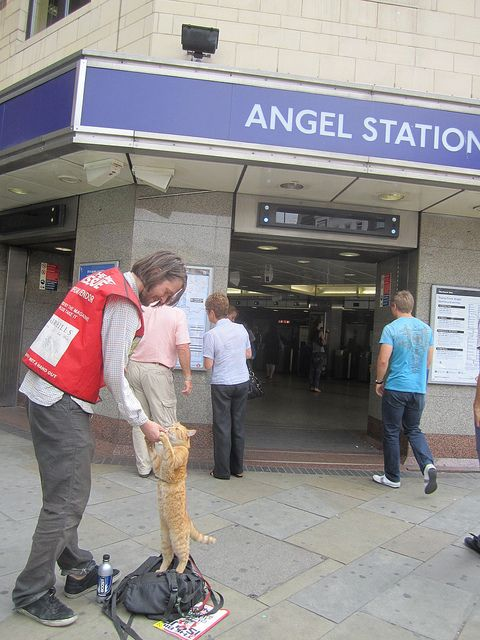 Bob the Cat outside Angel Tube by Annie Mole, via Flickr