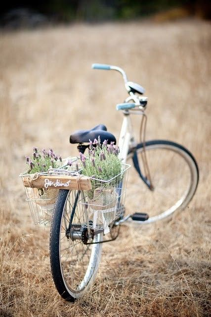 Britta Nickel ... you could do this with an old bike and planted lavender?