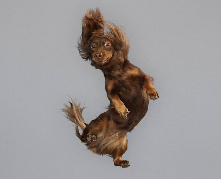 Flying Dogs – Capturing funny dogs in mid-air by Julia Christe