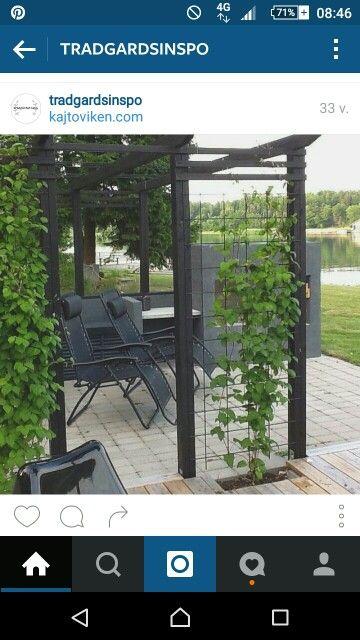 Spaljé uteplats sittning area trädgård garden humle