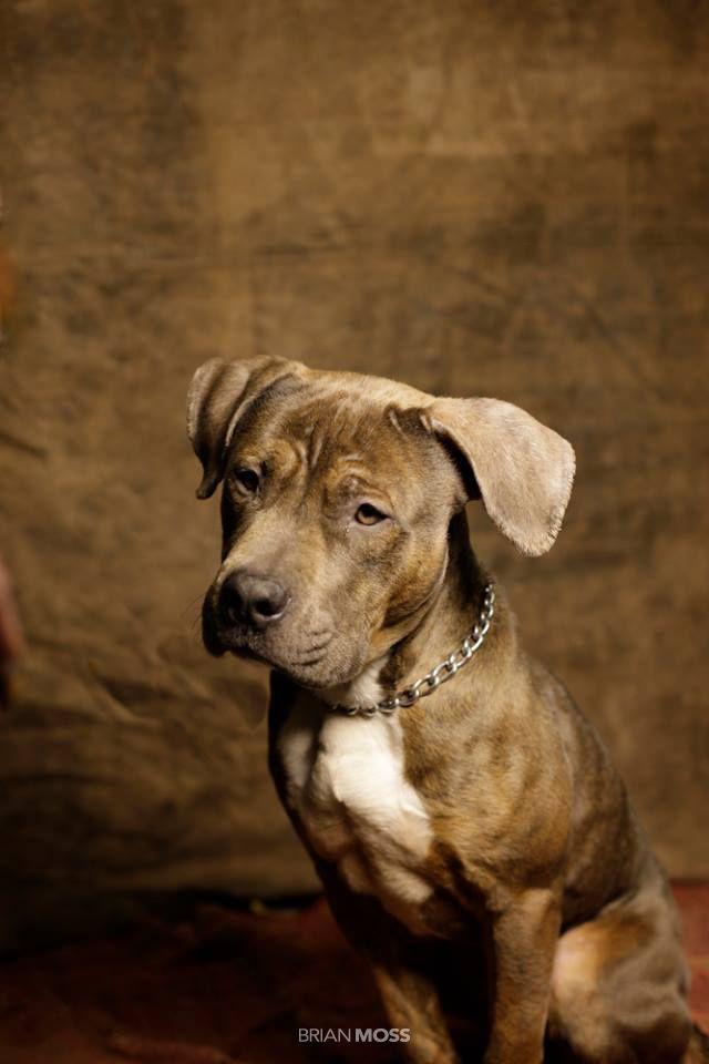 O fotógrafo Brian Moss decidiu inspirar as pessoas a ajudar animais de rua. Foi então que doou suas habilidades fotográficas para promover campanhas em prol da adoção de animais. O resultado é um lindo ensaio com os cachorros que moram num abrigo em Nova Jersey, EUA.