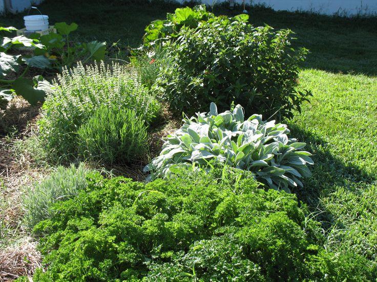 zone 6 plants garden ideasgarden - Garden Ideas Zone 6