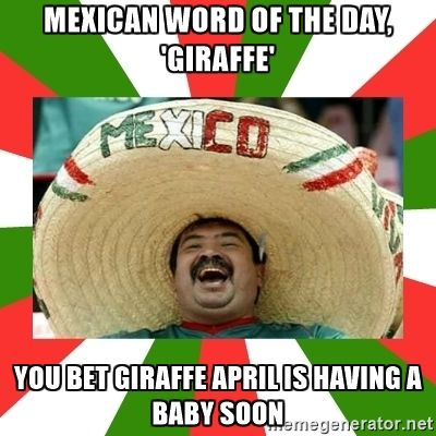 Mexican Word of the Day - Mexican Word of the day, 'giraffe' You bet giraffe april is having a baby soon