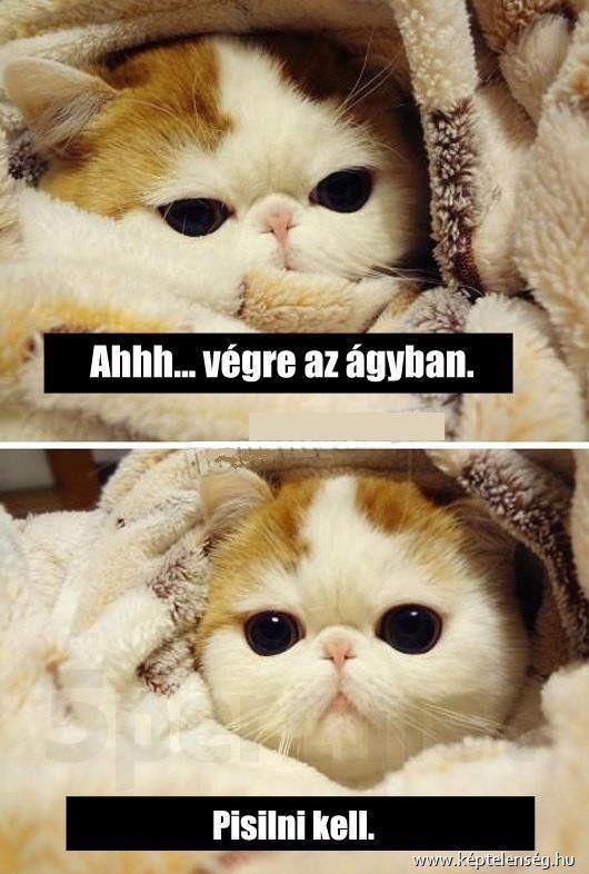 Macskás - vicces, szöveg, macskák, képek, cicák
