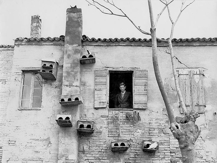 Piergiorgio Branzi, White Pigeon, 1954.