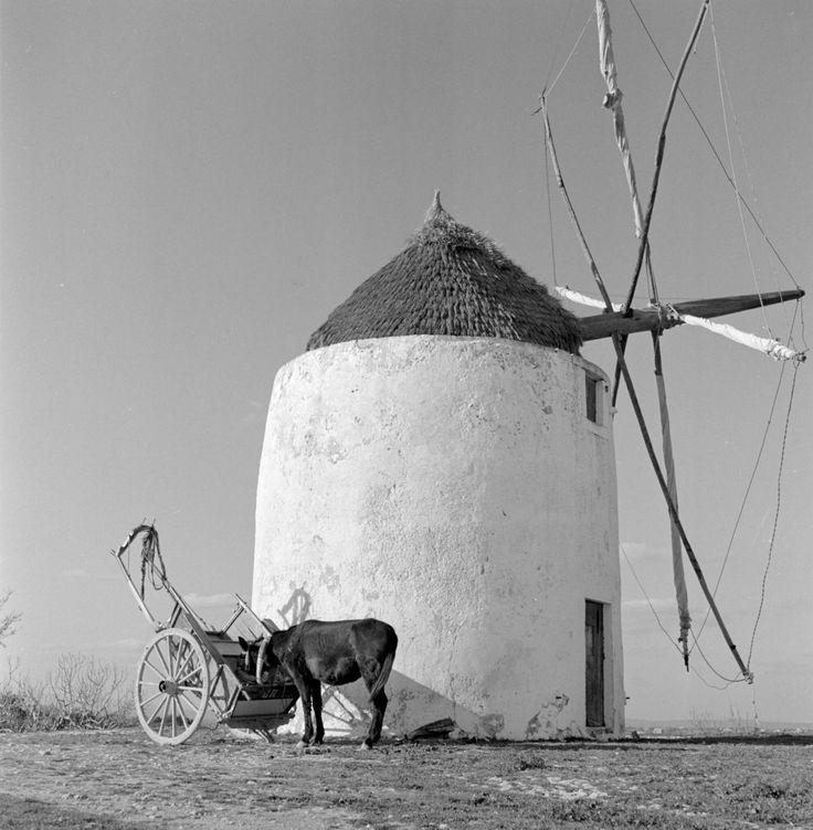 Artur Pastor - Moinho, Algarve. Décadas de 50/60.