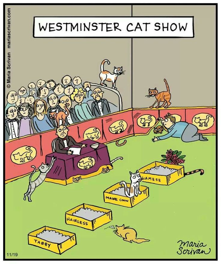 Westminster cat show cats pinterest westminster and - Cat cartoon shows ...
