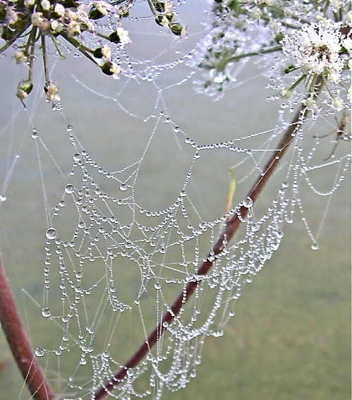 Bejeweled Web