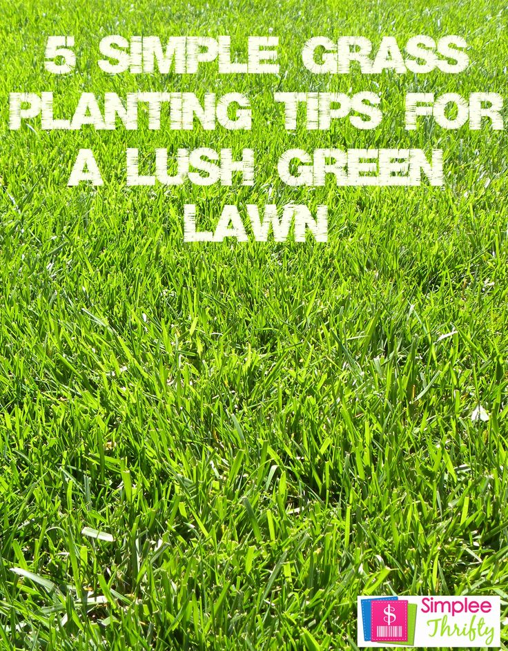 5+Simple+Grass+Planting+Tips+for+a+Lush+Green+Lawn
