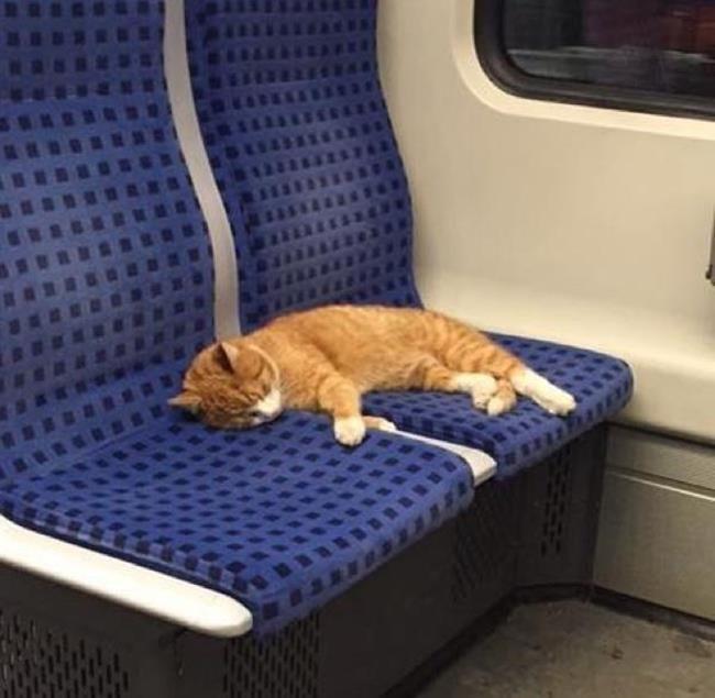 Metroda İki Koltuğu Kapıp Temiz Bir Uyku Çeken Sevimli Kedinin İç Isıtan Hikayesi Sanatlı Bi Blog 5