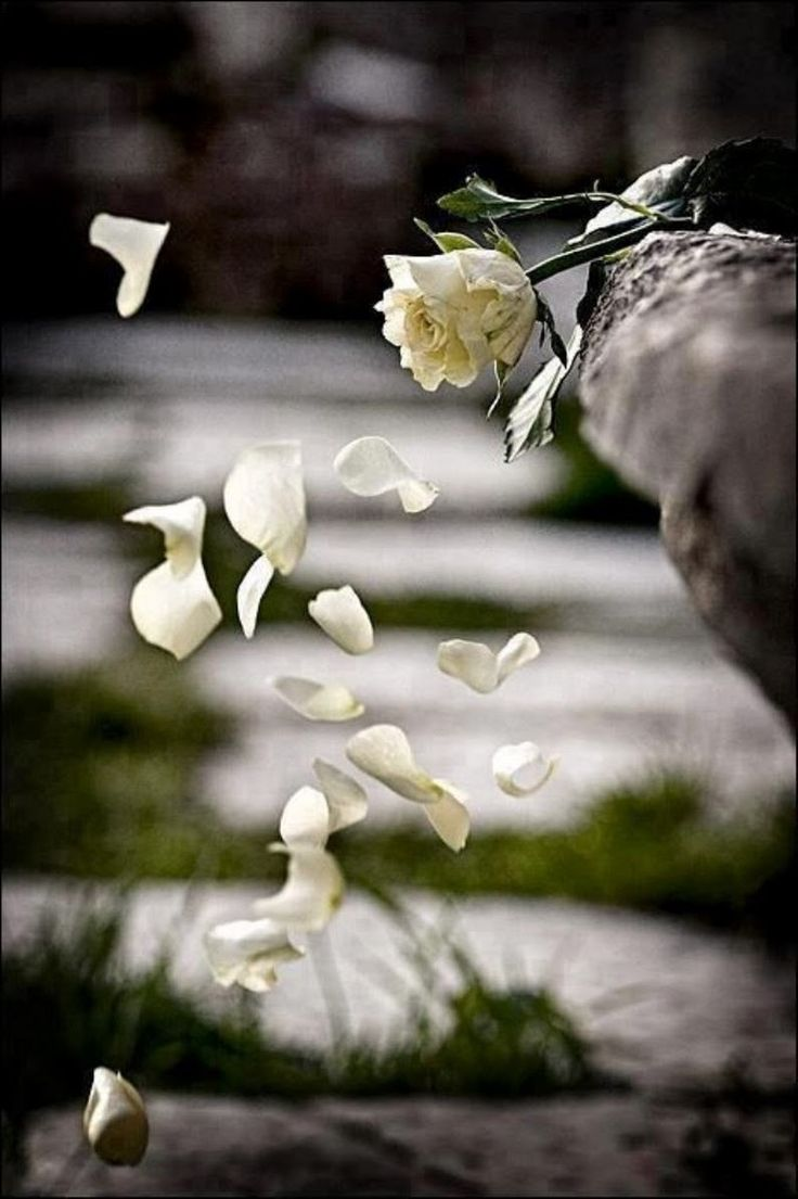 составу суглинистые печальные картинки цветов она быть деревянная