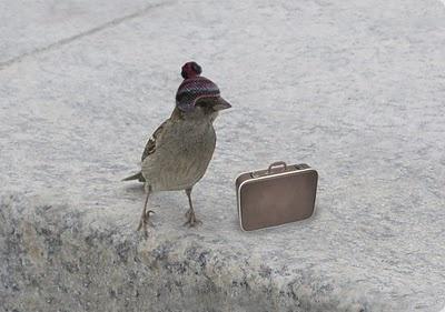 Migrating bird..