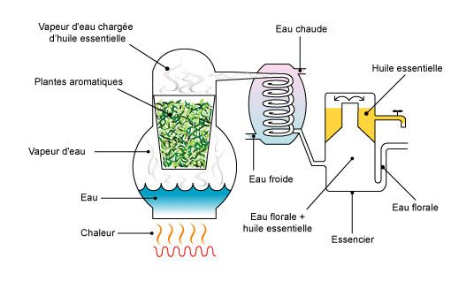 distillation huiles essentielles