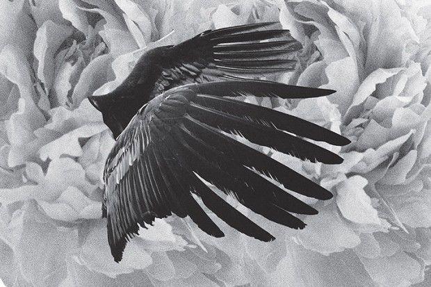 Mujuice – Metamorphosis album   Designcollector