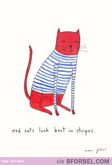 Red Kitty, Stripy Kitty…