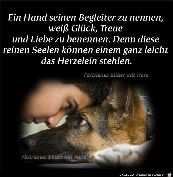 Ein Hund sein Begleiter