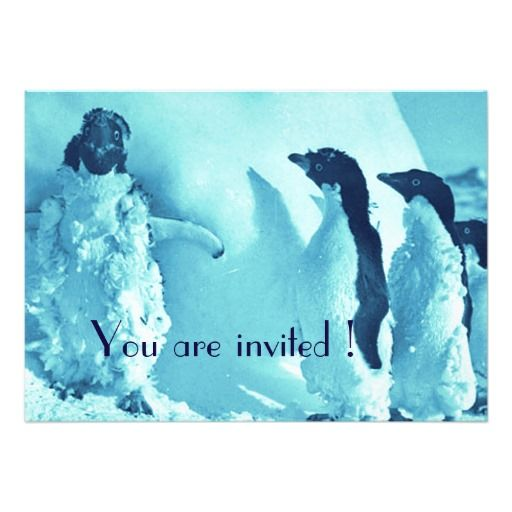 Cool  penguins after the blizzard cards