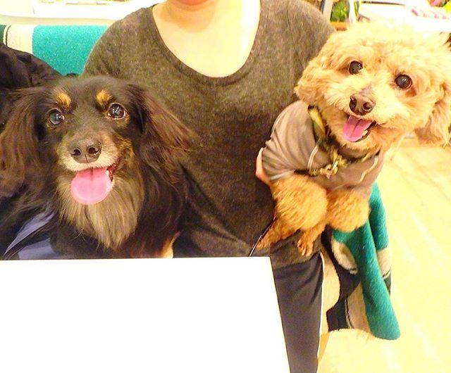 #元保護犬 ネギちゃん♡ダイちゃん お豆腐とサツマイモのご飯も気に入ってくれたようで素敵な笑顔☆ご来店ありがとうございます♫ . 本日も11時→open☆ 12時,13時台はご予約をいただいております🐾狙い目は14時以降と予測されます! 宜しくお願い致します。 . みなさまもアロハナいちにちを♡ . #dog #dogcafe  #dogstagram #pet #food #petcafe #ALOHANA #cafe #bar #tokyo #hawaii #ドッグカフェ #ペットカフェ #ペット #練馬 #東京 #愛犬 #お散歩 #お出かけ #元保護犬 #看板犬 #アロハナ #犬連れ #お酒 #犬店内ok