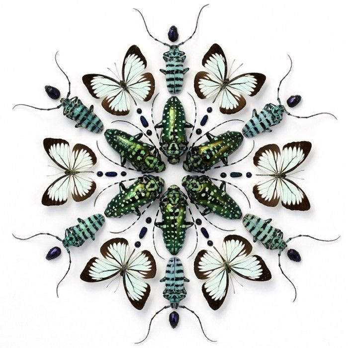 Christopher Marley – Insect Mosaics