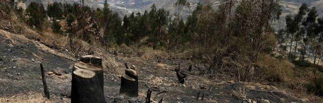 """De donkere kant van landbouwreus Cargill: """"In het Amazonegebied is soja het gewas van de dood"""" - http://www.ninefornews.nl/de-donkere-kant-van-landbouwreus-cargill-in-het-amazonegebied-is-soja-het-gewas-van-de-dood/"""