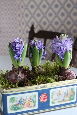 Image result for plant pot biscuit tin