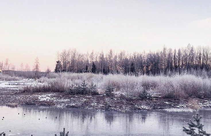 This morning I opened my eyes and found a very cold view behind my window  Winter really came early this year and I really dont like that  . . . . #finland #winter #suomi100  #suomi #lahti @visitlahti_official  #snow #frost #frozen #toocold #winterdays #winterishere #winterscene #thisisfinland
