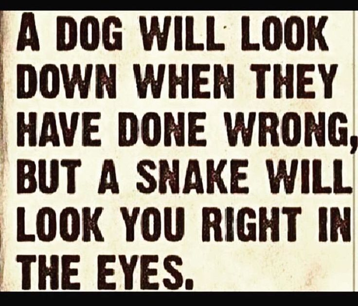 """A snake - right between the eyes and then claim you """"crazy"""" when yoouve exposed the last 12 years of BS and lies"""