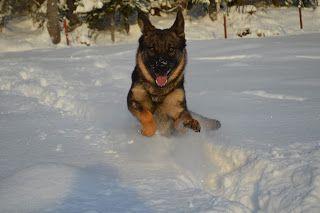 Gårdstunet Hundepensjonat: Flott vinterdag på tunet!