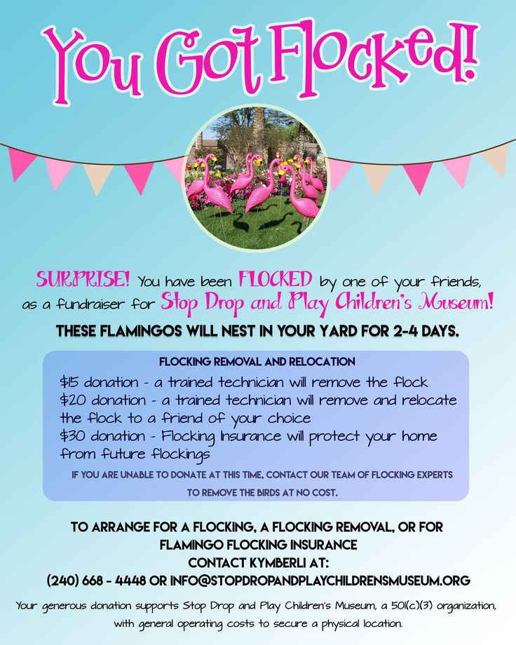 Flamingo flocking fundraiser!