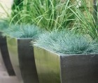 Planters with ornamental grass