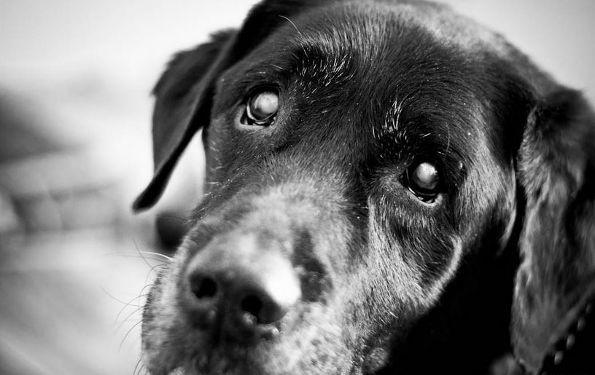 Best Ways To Train An Older Dog