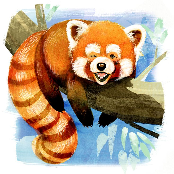 Our sleepy Red Panda submission for Animal Alphabet.