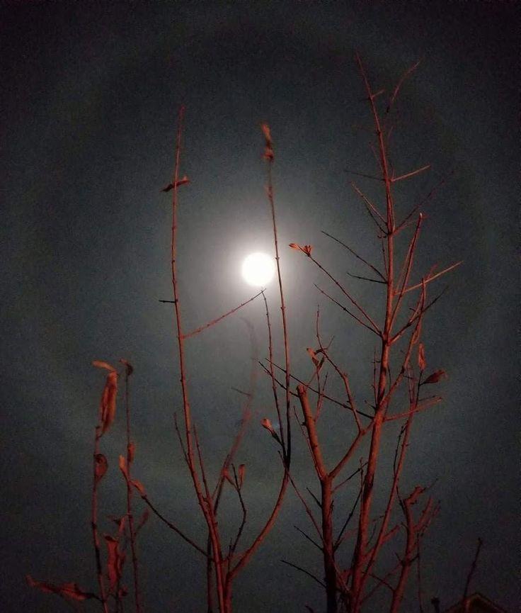 Last night's beautiful Super Moon... brightest of 2017. #moon #supermoon #nofilter #noedits #justgalaxy8andGod