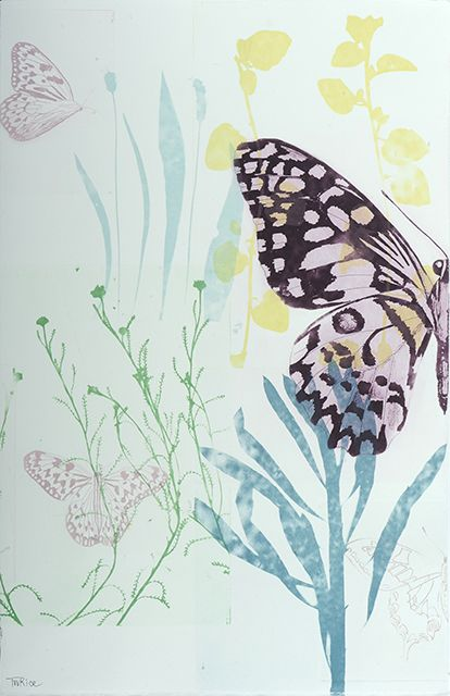 Butterfly series 'Coming into Spring'
