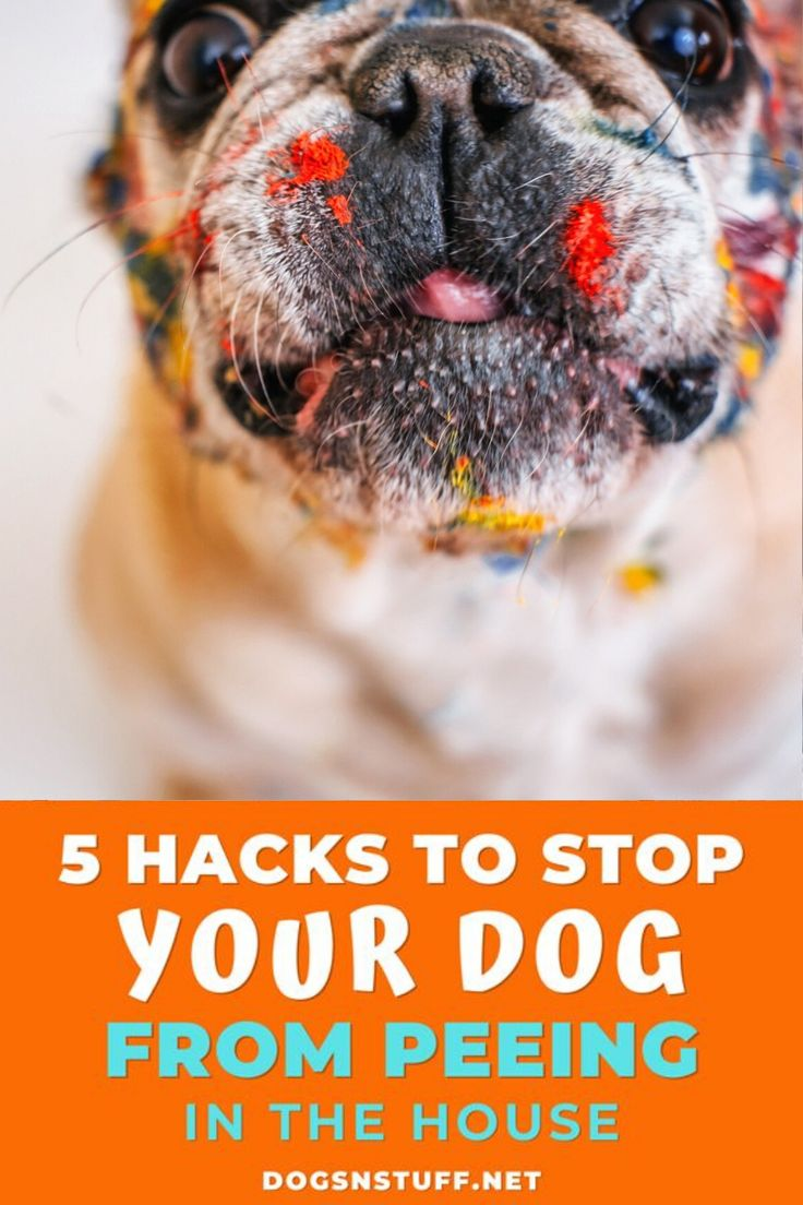 how to stop a dog from peeing in the house in the same spot