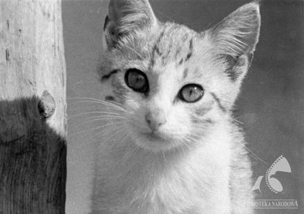 "Cute #cat in the film ""Psotny kotek"", 1960"
