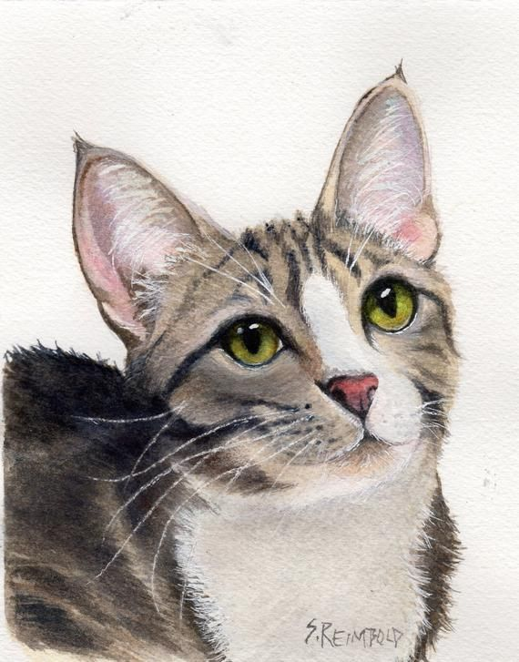 Tabby Kitten Original Watercolor Tabby Cat Tabby And White Cat Tiger Kitten By Sue Reimbold 5 X In 2020 Tabby Kitten Tabby Cat Silver Tabby Cat