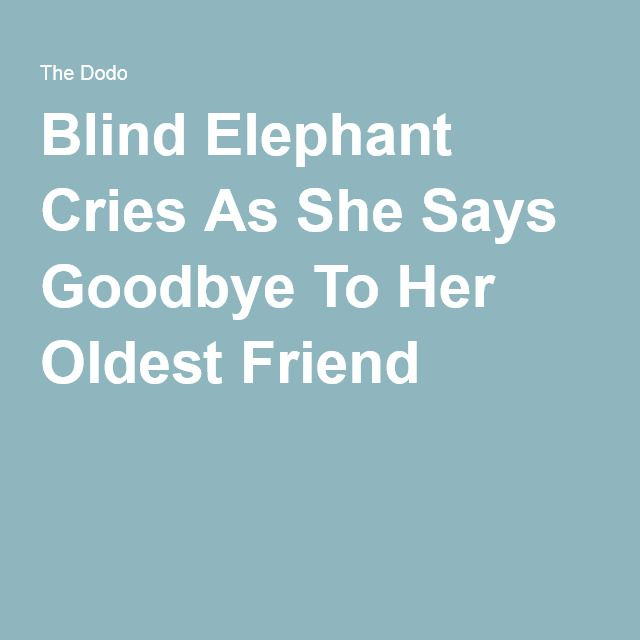 Blind Elephant Cries As She Says Goodbye To Her Oldest Friend