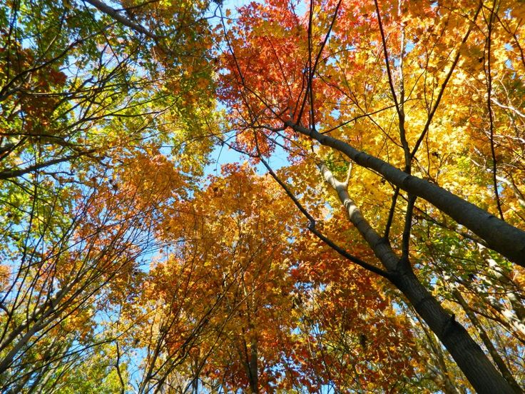 Autumn foliage Taylor Creek Park by garden muses: not another Toronto gardening blog.