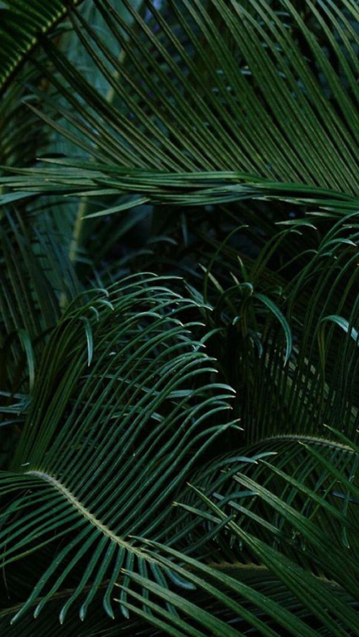Wallpaper iphone tropical - Green Wallpaper And Nike Image